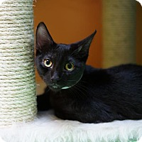 Adopt A Pet :: Canthia - Tucson, AZ