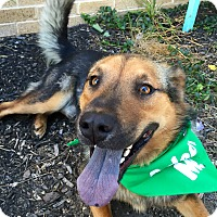 Adopt A Pet :: Rex - Wilmington, DE