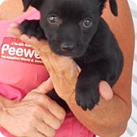Adopt A Pet :: Fergie - Saddle Brook, NJ