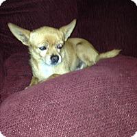 Adopt A Pet :: Gordy - Gilbert, AZ