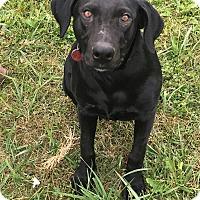 Adopt A Pet :: Greta - Loogootee, IN