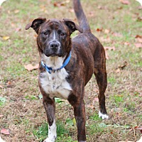 Adopt A Pet :: Daisy - Prince Frederick, MD