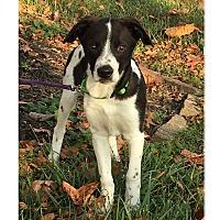 Adopt A Pet :: NEMO - LaGrange, KY