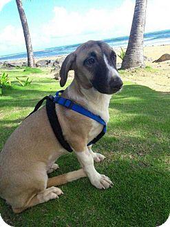 Corgi/Basset Hound Mix Dog for adoption in Elmsford, New York - Carmela