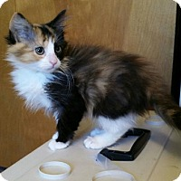 Adopt A Pet :: Nina - Highland, IN