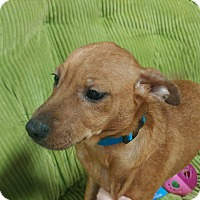 Adopt A Pet :: Chenille - Forest Hill, MD