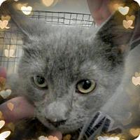 Adopt A Pet :: Fab - Trevose, PA