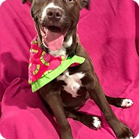 Adopt A Pet :: Jelly Belly Bean - Cleveland, OH
