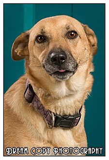 Shepherd (Unknown Type) Mix Dog for adoption in Owensboro, Kentucky - Sonia