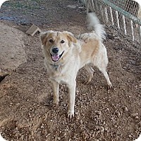Adopt A Pet :: buddy - Linden, TN