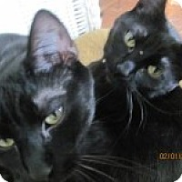 Adopt A Pet :: Sophie and Sylvia - Maywood, IL