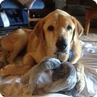 Adopt A Pet :: Tonka - Jacksonville, FL