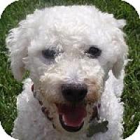 Adopt A Pet :: Wiggles - La Costa, CA