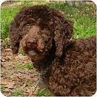 Adopt A Pet :: SC - Annie - Boca Raton, FL