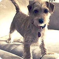 Adopt A Pet :: MAGGIE MAE - Mission Viejo, CA