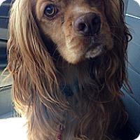 Adopt A Pet :: Charlie - Long Beach, CA