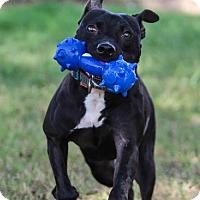 Adopt A Pet :: Sissy - chouteau, OK