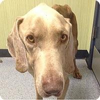 Adopt A Pet :: Jonah - Birmingham, AL