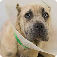 Adopt A Pet :: Abel**Med Hold** - Virginia Beach, VA