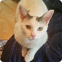 Adopt A Pet :: Coburn - Cleveland, OH