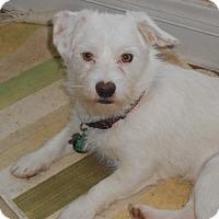 Adopt A Pet :: Nathan - Raleigh, NC