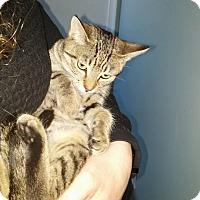 Adopt A Pet :: Latte - East Brunswick, NJ
