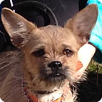 Adopt A Pet :: Eva - Spring Valley, NY