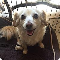 Adopt A Pet :: Jillian - San Diego, CA