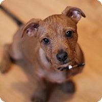 Adopt A Pet :: Wrigley - Mt. Prospect, IL