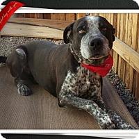Adopt A Pet :: Hans - Mesa, AZ