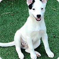 Adopt A Pet :: Tabitha - Gilbert, AZ