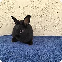 Adopt A Pet :: Geo - Bonita, CA
