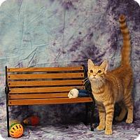 Adopt A Pet :: Mushu - Stockton, CA