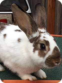 Other/Unknown Mix for adoption in St Helena, California - Cookie Dough