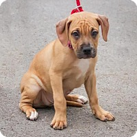Adopt A Pet :: Suma - Enfield, CT