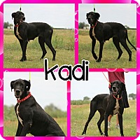 Adopt A Pet :: Kadi - Lubbock, TX