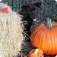 Adopt A Pet :: AJ - McDonough, GA