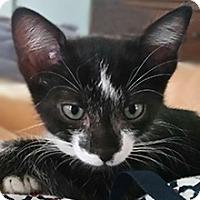 Adopt A Pet :: Gabby - Phoenix, AZ