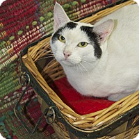 Adopt A Pet :: Precious - Bishopville, SC