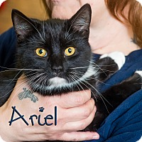 Adopt A Pet :: Ariel - Somerset, PA