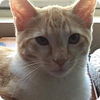Adopt A Pet :: Francoise - Santa Ana, CA