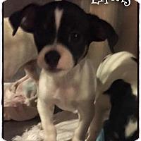 Adopt A Pet :: Linus - Simi Valley, CA