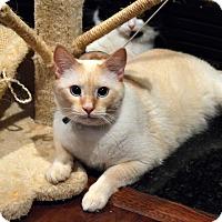 Adopt A Pet :: Snowy - Richmond, VA