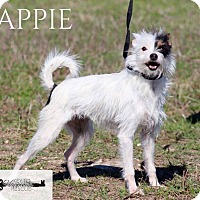 Adopt A Pet :: Yappie - DeForest, WI