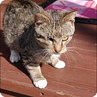 Adopt A Pet :: Captain Hook - Monterey, VA