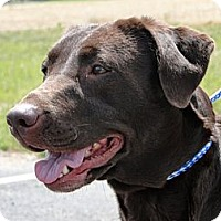 Adopt A Pet :: Ally - Lewisville, IN