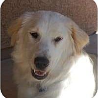 Adopt A Pet :: Carmella - Scottsdale, AZ