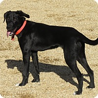 Adopt A Pet :: Katie - Meridian, ID