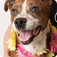 Adopt A Pet :: *DOROTHY - Sacramento, CA
