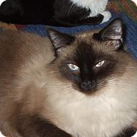 Adopt A Pet :: REBECCA - Encino, CA
